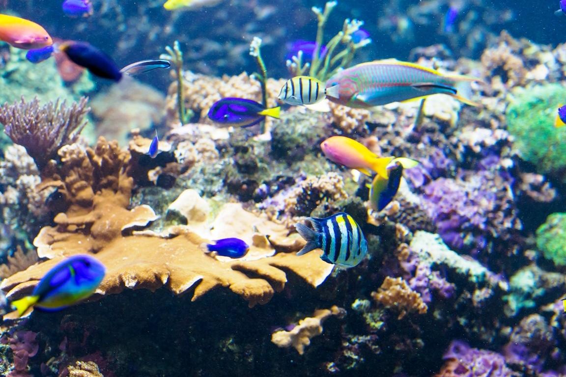 Algues alimentaires en mer