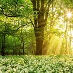 Maigrir durablement et naturellement